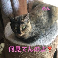 めん/猫/にこ/くろ/黒猫 こんばんはです。 今日も一日お疲れ様です…(2枚目)