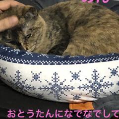 めん/猫/くろ/にこ/黒猫/癒し/... こんばんは。 今日も一日お疲れ様です。 …(2枚目)