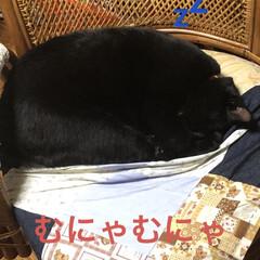 にこ/くろ/黒猫/めん/猫/癒し/... 今日も一日お疲れ様です。めんが今日はご挨…(3枚目)