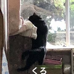親子/黒猫/くろ/めん/猫 アクティブなくろとめん。楽しくて仕方ない…(5枚目)