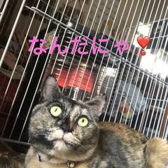 癒し/猫飼いのしあわせ/猫/めん 我が家のやんちゃ姫めんちゃん。ストーブ前…(3枚目)