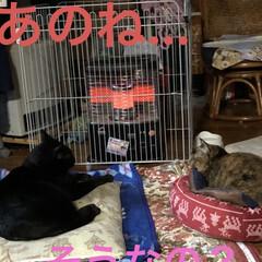 ストーブ前/くろ/にこ/黒猫/めん/猫/... おはようございます😊 冬らしい寒さです♪…(4枚目)
