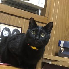 猫飼の幸せ/癒し/黒猫/にこ/暮らし うちの可愛い息子くんにこ😽 どうしても女…