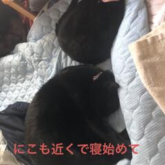 黒猫/くろ/にこ/猫/めん にこもめんもくろが大好き💕 少し涼しくな…(2枚目)