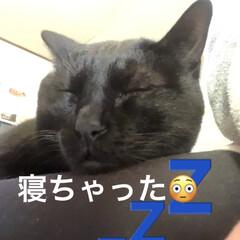 癒し/猫飼いのしあわせ/黒猫/にこ いつになく私につきまとうにこ。 リズム遊…(2枚目)