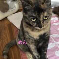 晩ご飯/黒猫/くろ/にこ/猫/めん こんばんはです。 今日も一日お疲れ様です…(6枚目)
