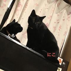 晩ご飯/黒猫/くろ/にこ/猫/めん こんばんはです。今日も一日お疲れ様です。…(6枚目)