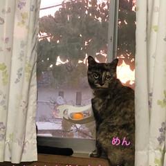 めん/猫/くろ/にこ/黒猫/空 おはようございます 朝焼け綺麗でした❣️…(2枚目)
