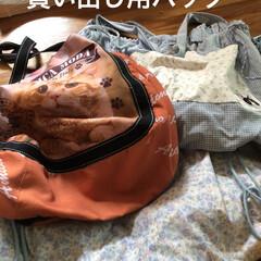 マイバック 猫さまのご飯あげたら🚗で買い出し。 まと…(2枚目)