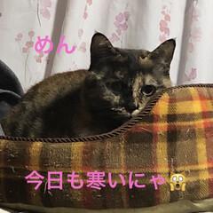 空/黒猫/にこ/くろ/猫/めん おはようございます。 朝の空はきれいでし…(3枚目)