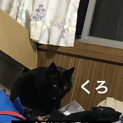 晩ご飯/猫飼さんのしあわせ/黒猫/くろ/猫/めん/... 今日も一日お疲れ様でした。 今日は暑かっ…(2枚目)