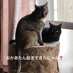 めん/猫/にこ/くろ/黒猫 昨夜明日はリビング掃除しようと決めてたの…(4枚目)