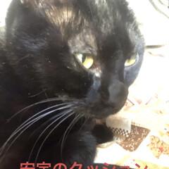 癒し/猫飼いのしあわせ/黒猫/にこ いつになく私につきまとうにこ。 リズム遊…(8枚目)