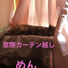 空/朝ご飯/にこ/くろ/黒猫/めん/... 猫たちに朝ご飯したらなんとなく耳鳴りが酷…(7枚目)