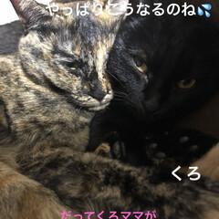 晩ご飯/親子/めん/猫/くろ/黒猫/... 晩ご飯の時間は猫さまたちのねんねタイム。…(3枚目)