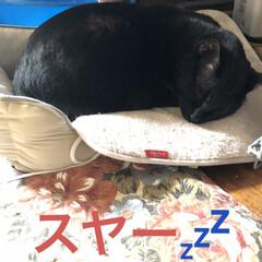 空/猫/めん/にこ/黒猫/くろ/... おはようございます。良いお天気になりまし…(8枚目)