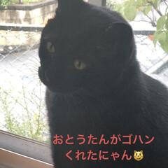 黒猫/くろ/にこ/猫/めん おはようございます。 今朝はまた起き上が…(3枚目)