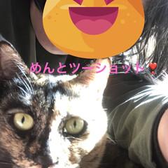 猫/めん/癒し/猫飼いのしあわせ めずらしくめんとツーショット💕 いつでも…(1枚目)