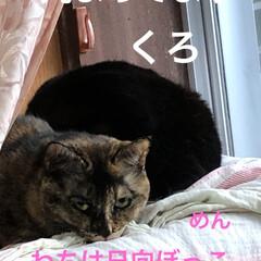 朝ご飯/猫/めん/黒猫/にこ/くろ/... 今朝の我が家。早朝から3匹と1人でストー…(4枚目)