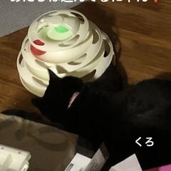 黒猫/くろ/にこ/猫/めん こんばんはです。 今日も一日お疲れ様です…(3枚目)