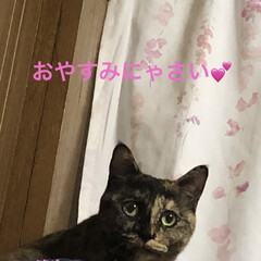 めん/猫/にこ/くろ/黒猫 こんばんはです。 ただ今猫さまたちは寝室…(7枚目)
