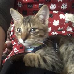 猫飼いのしあわせ/癒し/猫/めん/ちび 今日は長く1階にいてたので写真たくさん撮…(5枚目)