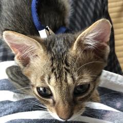 里親さん募集中。/猫/ちび 一階の猫様寝てる間に二階のちびのご飯の皿…(4枚目)