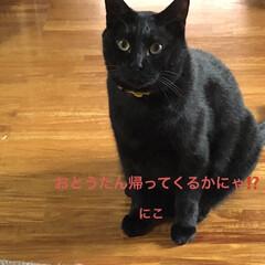 にこ/くろ/黒猫/猫/めん おはようございます☀ 雲はありますがお日…(7枚目)