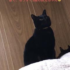黒猫/にこ にこの特集です。 (4枚目)