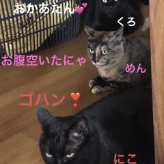 晩ご飯/めん/猫/黒猫/くろ/にこ こんばんはです。今日も一日お疲れ様でした…(1枚目)
