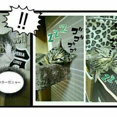 ホラー/面白い/猫