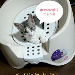 猫用トイレ/かわいい/ベット/トイレ/キャット/猫/... トイレが小さくなったので、新しく便座付き…
