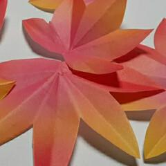リミとも部/折り紙/モミジ作り/ハンドメイド maruです。 ニックネームまる(mar…