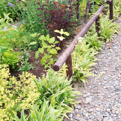 家庭菜園/我が家の庭 我が家の庭と畑です。 最近全く雨が降らな…(5枚目)