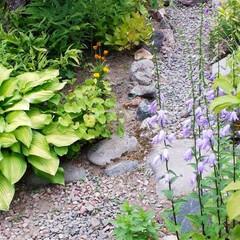 家庭菜園/我が家の庭 我が家の庭と畑です。 最近全く雨が降らな…(6枚目)