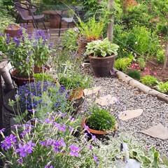 ヒペリカム/蕎麦畑/我が家の庭 庭の花たちと散歩途中の蕎麦畑です(9枚目)