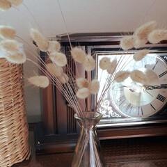 ラグラスバニーテル/ドライフラワー 私の大好きなお花です。  花が終わると勝…