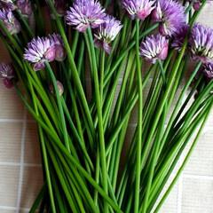 チャイブの花/ハーブ チャイブの花をもらいました。ハーブで、シ…(3枚目)