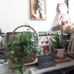 アスパラ/アイビー/ガーデン雑貨/鉢カバー 昨日造園、植木屋さんで買っちゃいました😊…(3枚目)