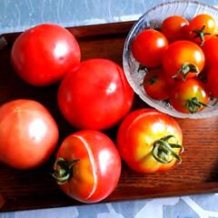 寒い日/トマト/手作りぱん 今日は北海道は寒い日です。今義母と🐶のた…(2枚目)
