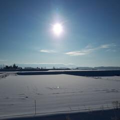 キタキツネ/ウォーキング途中/寒い朝/冬の風景 今朝は-17℃と気温が下がりました。 で…