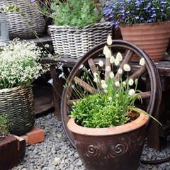 家庭菜園/我が家の庭 我が家の庭と畑です。 最近全く雨が降らな…(2枚目)
