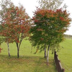 芦別町/散歩コース/ススキ/稲刈り/旭岳 晩秋の風景と私の散歩コースです。もうほと…