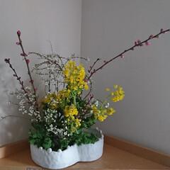 春/いけばな/ひな祭り/ピンク ひな祭り🎎 花桃、菜の花、雪柳