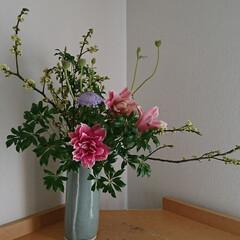いい香り/春/いけばな 青もじ、ローズリリー、 ブルーレースフラ…