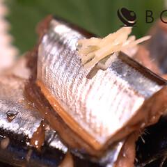 秋刀魚料理/さんまレシピ/魚料理/魚レシピ/家飲み/宅飲みレシピ/... 「ふわふわやわらかな、さんまの煮物」  …(1枚目)