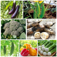 教えて下さい/旦那さんの嫌いな野菜達/野菜を食べてほしい/嫌いな野菜/簡単/節約 うちの旦那さんの嫌いな野菜達💦 どうした…