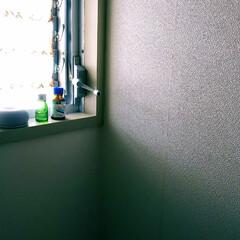 ハッカ油 20mL(滴下式) | 健栄製薬(アロマグッズ)を使ったクチコミ「朝の日課☼ トイレ掃除 + アロマストー…」