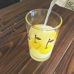 暮らしを楽しむ/購入品/一目惚れ/お気に入り/コップ/昭和モダン/... さっぱり1杯 ☕︎︎ グレープフルーツが…