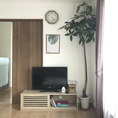 マイホーム/観葉植物/パキラ/寝室インテリア/寝室/おしゃれ 寝室にパキラを置きました🌲 大きすぎ😂!…